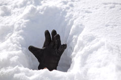 Hand in Snow